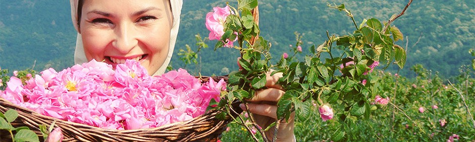 rose_plantations